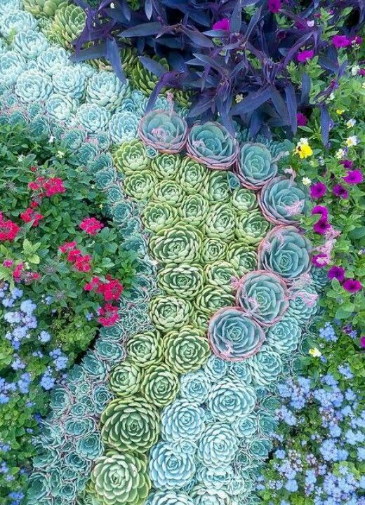 Succulent art what 39 s hot by jigsaw design group for Garden mosaic designs
