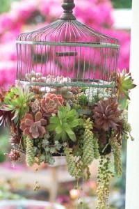 succ birdcage